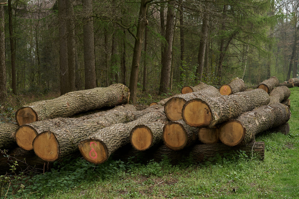 Oak logs for sale with Turner Logging