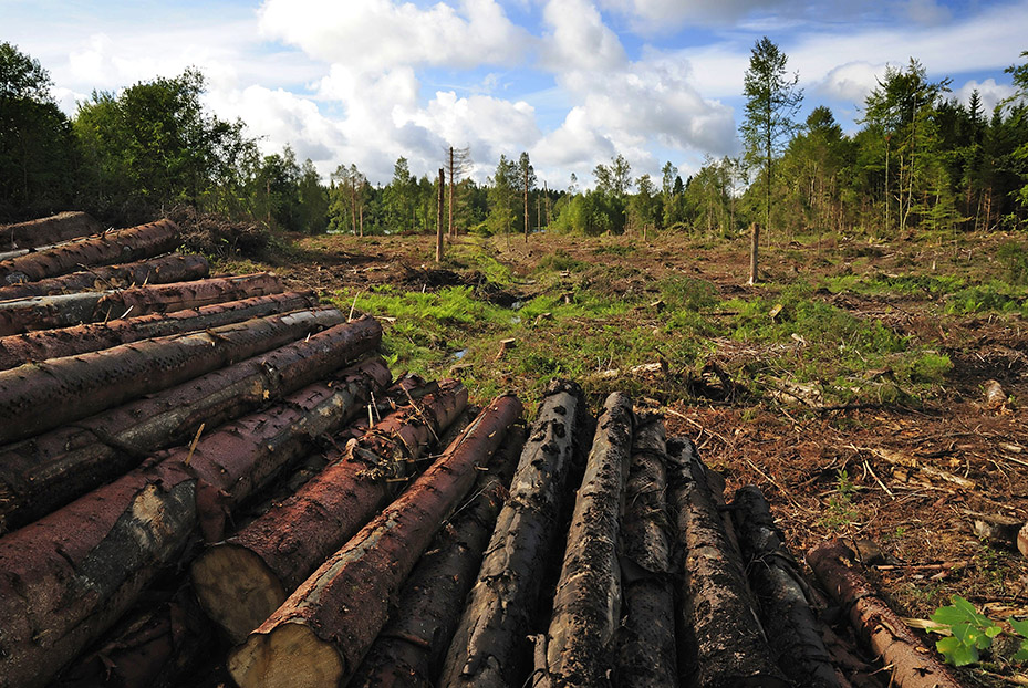 clear cut logging and other options essay Free essay: clear cut logging and other options have you ever awakened on a beautiful sunny morning in the southwest planning on going for a hike in the.