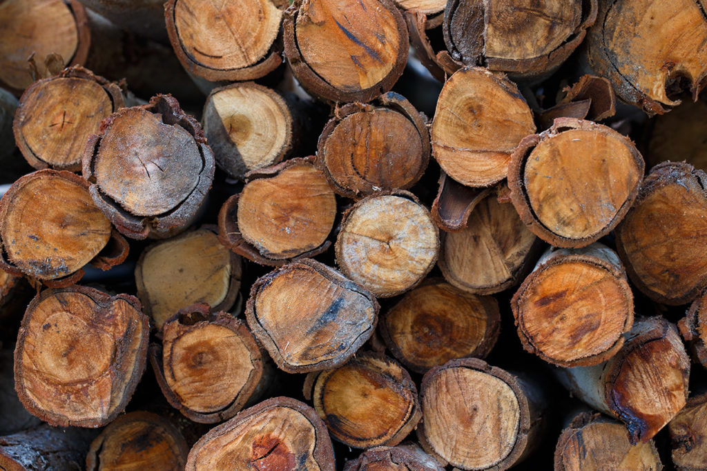 Conscientious Logging Has Serious Benefits